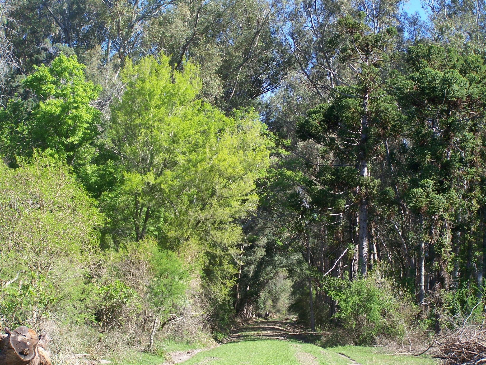 Gobierno de santa fe producci n y venta de especies for Proyecto productivo de vivero forestal